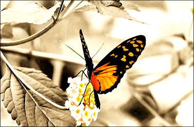 Schmetterling 21