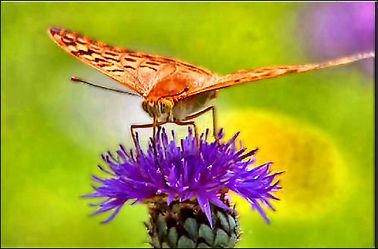 Bild mit Natur, Insekten, Schmetterlinge, Makroaufnahme, Digital Art, Tiere & Insekten, Schmetterling, Insekt