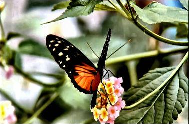 Bild mit Natur, Insekten, Schmetterlinge, Tier, Tiere/Insekten, Schmetterling, Frühlingsidylle