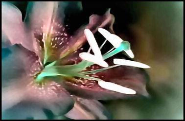 Bild mit Makroaufnahme,Blume,Lilie,Blumen im Makro,Filterbilder 2,Blumenmakro,Digitale Blumen