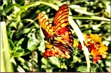 Bild mit Insekten, Makroaufnahme, Digital Art, Tiere & Insekten, Schmetterling, Insekt