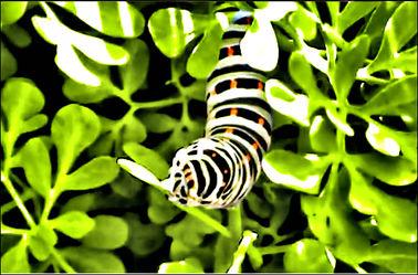 Bild mit Makroaufnahme, DigitalArt, Raupen und Schmetterlinge, Schmetterling, Makrobilder