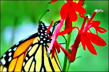 Bild mit Makroaufnahme, Digital Art, Digitale Kunst, Schmetterling, Makrobilder