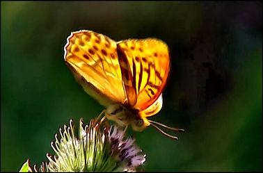 Bild mit Makroaufnahme, Blumen im Makro, Digital Art, Schmetterling, Blumenmakro, Digitale Blumen