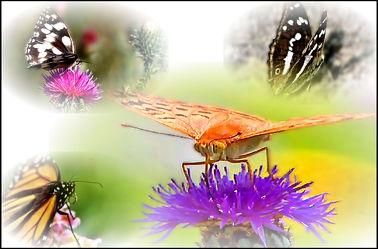 Bild mit Makroaufnahme, Digital Art, Collage, Digitale Kunst, Digitales, Schmetterling, Digitale Blumen
