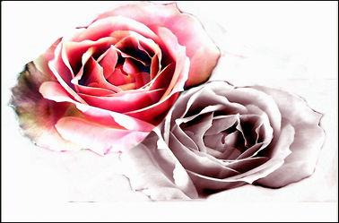 Bild mit Blumen,Rosen,Rosenblüte,Digital Art,Design,Rosenträume,Digitale Kunst,Digitale Blumen