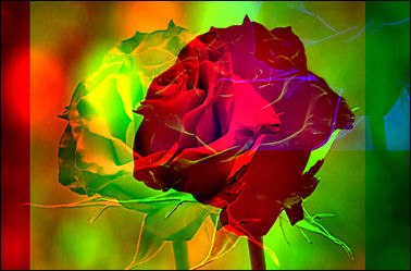 Bild mit Rosen,Blumen im Makro,Digitale Kunst,Digitales,Blumenmakro,Digitale Blumen