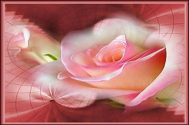 Bild mit Rosen,Makro Rose,Rosenblüte,Blumen im Makro,Digitale Kunst,Digitales,Blumenmakro,Digitale Blumen