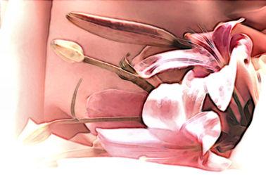 Bild mit Lilie,Digital Art,Blumiges,Digitale Blumen