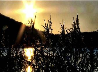 Bild mit Natur,Wasser,Landschaften,Gewässer,Seen,Sonnenuntergang,Sonnenaufgang,Schilf,See,Teich