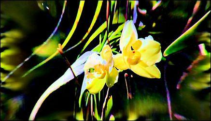 Bild mit Orchideen, Blütenzauber, Blumen im Makro, Blumiges, Blumenmakro