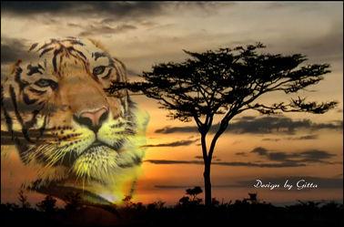 Tiger in der Steppe