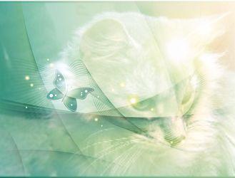 Verträumte Katze