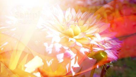 Bild mit Blumen,Dahlien,Blume,Blütenzauber,blütenkompositionen,Bildercollagen,Collagen,Collage,Digitale Blumen,Blumen Collagen