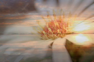 Bild mit Blumen, Sonnenaufgang, Sonne, Meer, Blume, Gerbera, Sonnenuntergänge, Am Meer, ozean