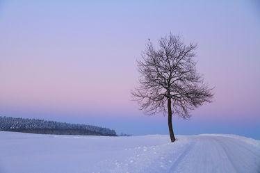 Bild mit Natur,Landschaften,Bäume,Winter,Schnee,Sonnenuntergang,Sonnenaufgang,Baum,Landschaft,Winterlandschaften,Winterbilder,Frost,Winterbild