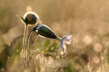 Bild mit Natur, Pflanzen, Blumen, Makrofotografie, Blume, Pflanze, Makro, Entspannung, Erholung, Naturfotografie, Umwelt, Entspannen