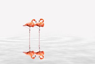 Bild mit Tiere,Natur,Vögel,Vögel,Tier,Tierfotografie,Animal,Wildlife,Umwelt,Tierbild,Tierbilder,Tierfoto,Flamingo,Flamingos