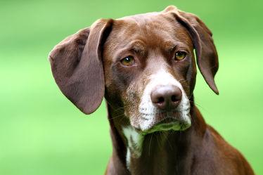 Bild mit Tiere,Natur,Hunde,Tier,Hund,Welpe,Tierfotografie,Animal,Umwelt,Welpen,Tierbild,Tierbilder,Tierfoto