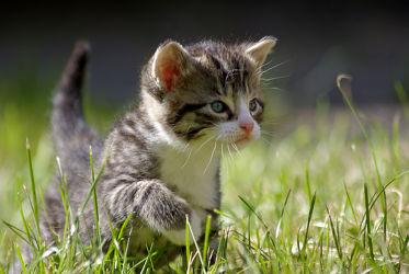 Bild mit Tiere,Natur,Katzen,Tier,Katze,Umwelt,Katzenbaby