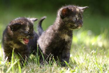 Bild mit Tiere,Natur,Katzen,Tier,Katze,Tierfotografie,Animal,Kater,Umwelt,Tierbild,Tierbilder,Tierfoto,kitty