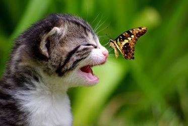 Bild mit Tiere,Natur,Katzen,Schmetterlinge,Tier,Katze,Schmetterling,Umwelt,Katzenbaby