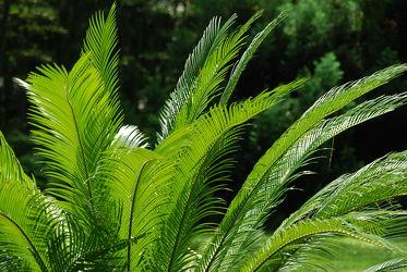 Bild mit Grün,Palmen,Palme,Tapete,Harmonie in Grün,wandtapete,fototapete,ruheraum,saunabereich,erfrischend,frisch,palmwedel