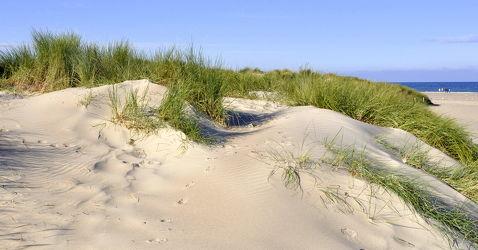 Bild mit Grün,Sand,Strand,Sandstrand,Ostsee,Dünen,Dünengras,Wellness,Strandhafer,Spuren,Hell,freundlich