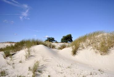 Bild mit Grün,Sand,Strand,Sandstrand,Ostsee,Dünen,Dünengras,Wellness,Strandhafer,Hell,freundlich