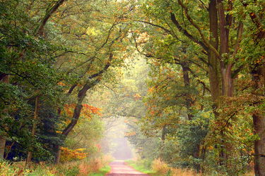 Bild mit Bäume, Herbst, Baum, Weg, Waldweg, Spazierweg, Allee, baumallee, herbstlich