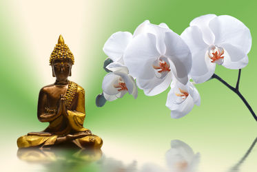 Bild mit Grün, Steine, Orchidee, Pflanze, weiss, Meditation, Licht, Ruhe, Entspannung, Spiegelung, Buddha, Wellness, Wellness, frisch, Erholung, Religion, Symbol, relax, glaube, symbolik, EXOTIC, shui, lichtstrahlen