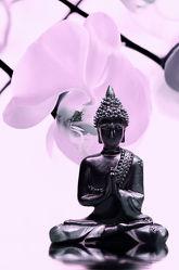 Bild mit Blumen, Rosa, Schwarz, Steine, Blume, Orchidee, Pflanze, Meditation, Ruhe, Entspannung, Spiegelung, Buddha, Buddha, Wellness, Wellness, blüte, detail, pink, Erholung, Deko, asien, Religion, dekorativ, Dekoration, Symbol, relax, glaube, symbolik, EXOTIC, shui