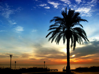 Bild mit Natur, Pflanzen, Landschaften, Meere, Sonnenuntergang, Urlaub, Palmen, Sommer, Sonnenaufgang, Meer, Landschaft, Palme, Ferien, Reise, summer, ozean, trip