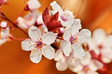 Bild mit Natur, Grün, Pflanzen, Blumen, Insekten, Blau, Sommer, Tier, Blume, Pflanze, Makro, Blumen und Pflanzen, Fauna, Flora, blüte, Insekt, Kornblume, Schwebfliege