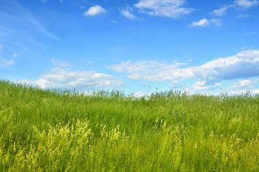 Bild mit Natur, Grün, Gräser, Landschaften, Himmel, Wolken, Frühling, Wolkenhimmel, Landschaft, Gras, Wiese, Feld, Felder, Tapete, Wiesen, Weide, Weiden, Hell