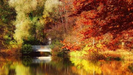 Herbst im Park