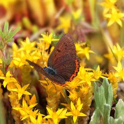 Bild mit Tiere, Natur, Insekten, Schmetterlinge, Tier, Wiese, Schmetterling, Insekt