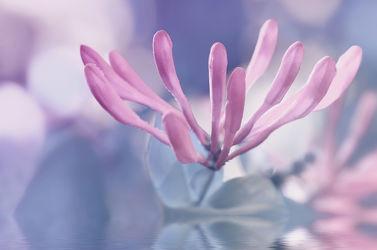 Bild mit Pflanzen,Blumen,Blumen,Frühling,Blau,Baum,Blume,Pflanze,Spiegelung,Flora,Blüten,blüte,dekorativ,blühen,baumblüte