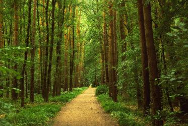 Bild mit Natur, Landschaften, Bäume, Laubbäume, Wald, Baum, Weg, Waldweg, Waldweg, Blätter, Landschaft, Laubbaum, Blatt, Im Wald, Erholung, relax