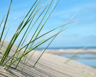 Bild mit Natur, Wasser, Landschaften, Seen, Strände, Sonnenuntergang, Sonnenaufgang, Strand, Sandstrand, Ostsee, Meer, Düne, Dünen, Dünengras, See, Strandhafer