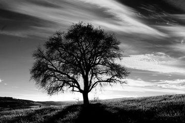 Bild mit Bäume,Sonnenuntergang,Sonnenaufgang,Baum,Eiche,Landschaftsfotografie,schwarz weiß,alleinstehender Baum