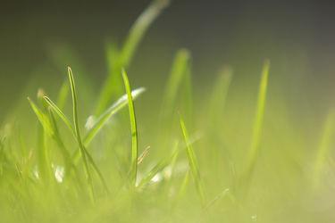Bild mit Natur,Pflanzen,Blumen,Frühling,Blume,Pflanze,Blüten,Frühlingsgefühle,blüte,Grashalm,Grashalme,wiesenblume,frühlingsblüher