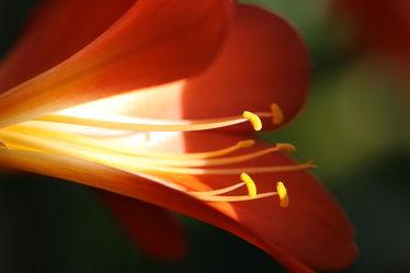 Bild mit Natur,Pflanzen,Blumen,Blume,Pflanze,blüte