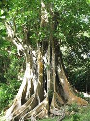 Bild mit Natur, Landschaften, Bäume, Wälder, Wald, Baum, Landschaft, Urwald