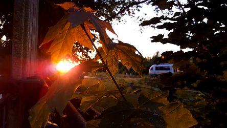 Bild mit Wälder,Sonnenuntergang,Sonnenaufgang,Wald,Blätter,Blatt,Görlitz,Görlitzer Bahnhof