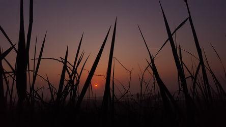 Bild mit Himmel, Sonnenuntergang, Sonnenaufgang, Ostsee, Dünen, Sunset, romantik, Strandhafer