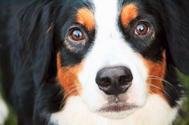 Bild mit Haustiere,Hunde,Tier,Hund,Dog,Familienhund,Tierisches