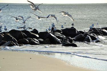Bild mit Nordseeküste