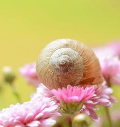 Bild mit Pflanzen, Blumen, Schnecken, Blume, Pflanze, Schnecke, schneckenhaus