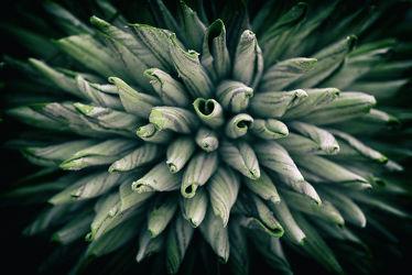 Bild mit Natur, Pflanzen, Blumen, Hintergrund, Blume, Pflanze, Flora, Fotografie, alternativ, plants